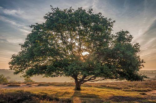 De glorieuze boom van