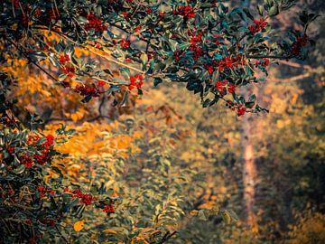 Rote Beeren im Wald