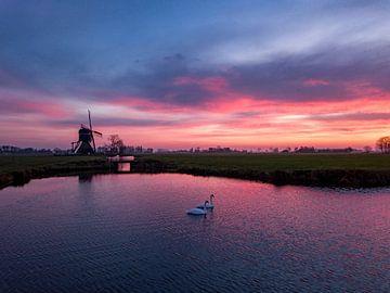 Zwanen bij zonsopkomst van Martijn de Ruijter