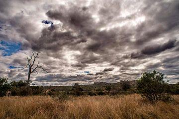 Giraffes met een prachtig wolkendek van Rob Smit