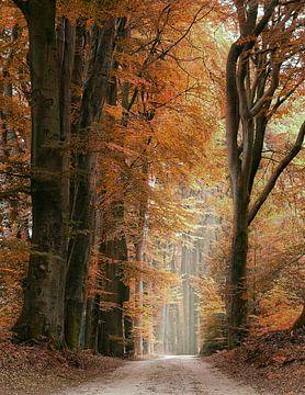 Speulderbos in herfstkleuren van Michelle Coppiens