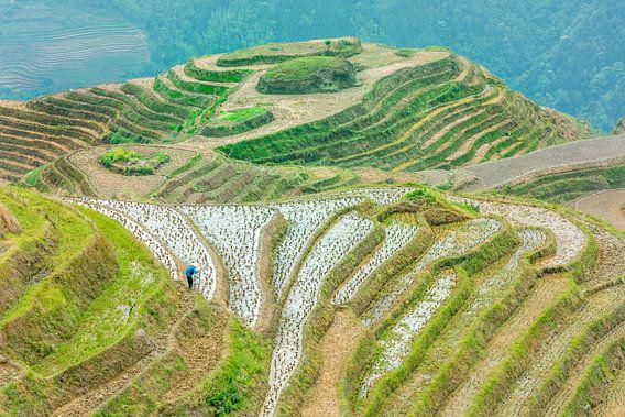 Longji rijst velden, Guangxi province, China van Ruurd Dankloff
