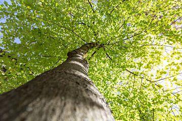 Saftig grüne Baumkrone von Oliver Henze