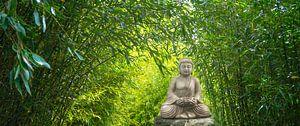 buddha statue im bambus garten von Dörte Stiller