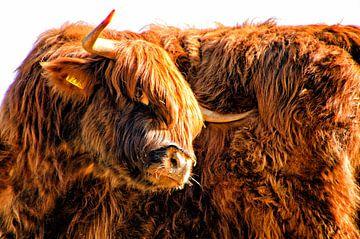Portrait eines schottischen Hochländers von Jessica Berendsen