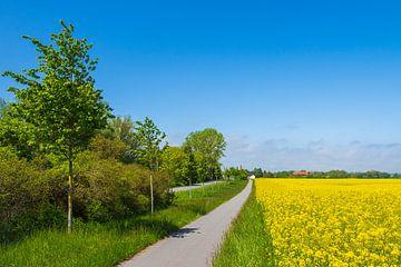Rapsfeld, Radweg und Straße mit Bäumen bei Parkentin von Rico Ködder