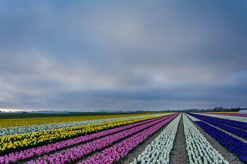 Hyacinten veldje