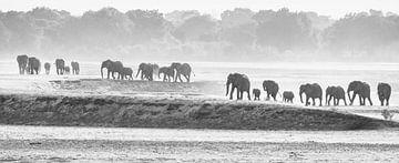 Elefantenherde auf dem Weg zum Fluss von Anja Brouwer Fotografie