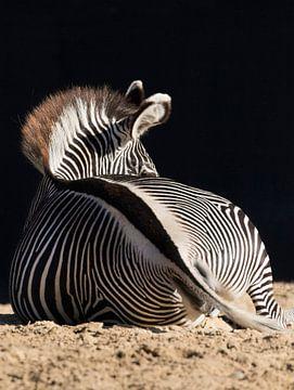 zebra von anja voorn
