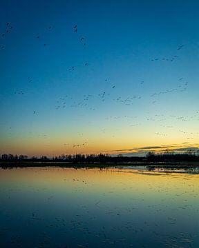Migration des oiseaux 1