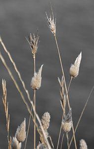 Gedroogde bloemen, naturel op zwart wit