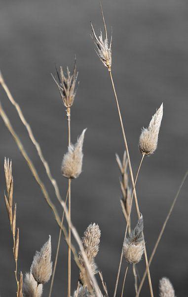 Gedroogde bloemen, naturel op zwart wit van Bianca ter Riet