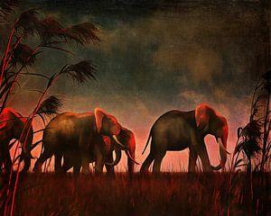 Olifanten op wandel