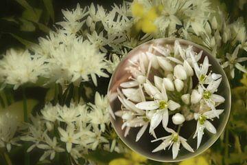In der Glaskugel - Bärlauchblüten von Christine Nöhmeier