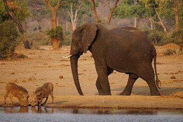 Olifant ontmoet wrattenzwijnen van Erna Haarsma-Hoogterp