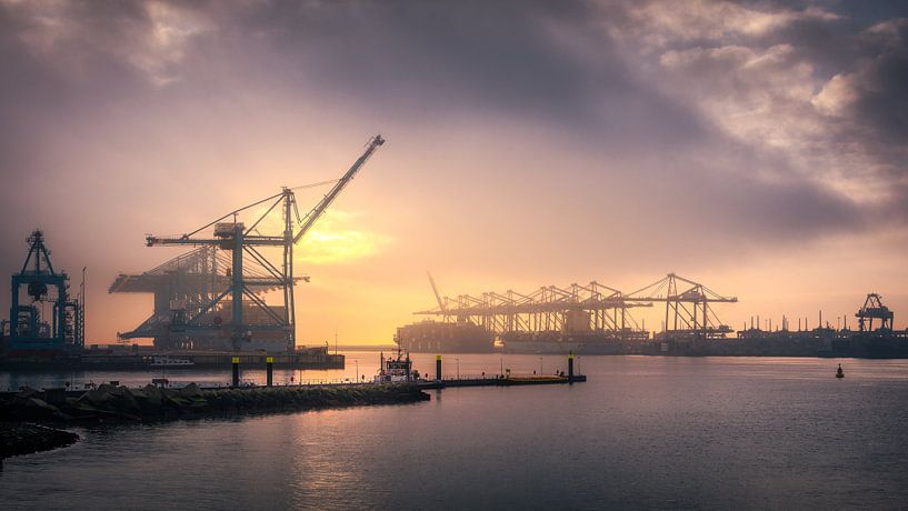 APM II Container Terminal van Nico Dam