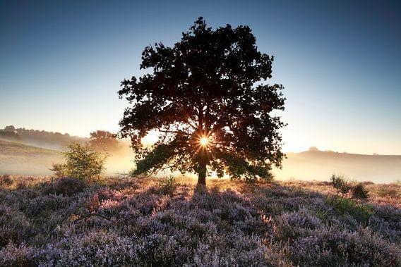 Morning beauty van Olha Rohulya
