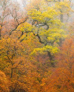 Herbst in den Highlands von Schottland von Jos Pannekoek