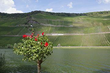Rozen en wijn van Berthold Werner