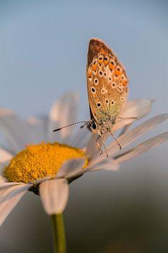 Vlinder van Tiny Dekker