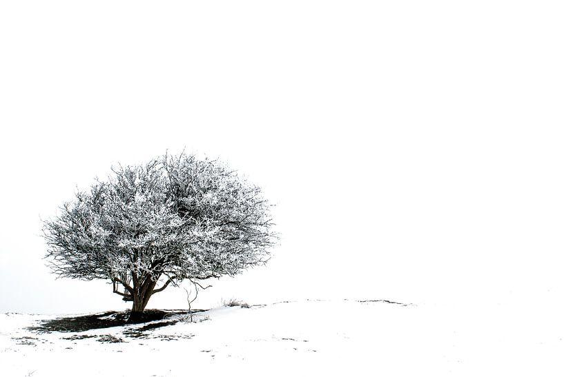 Einsamer Baum im Schnee 2 von Jacqueline Lodder