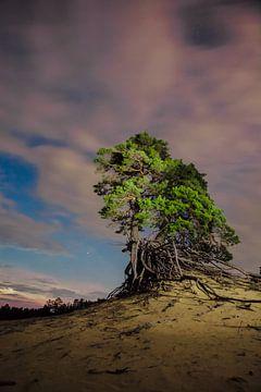 Nacht Landschaft grün alten Tannenbaum und rosa Wolken. von Michael Semenov