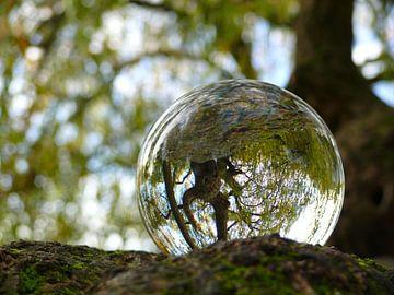 Glazen bol in boom, glazen bollenfotografie van RaSch_Design