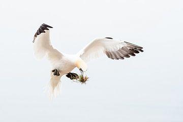 Landing - Coming down van Els Keurlinckx