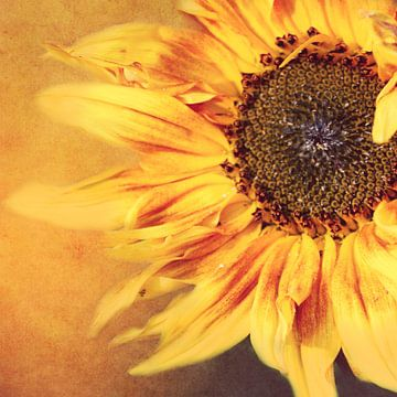 Sonnenblume sur Heike Hultsch