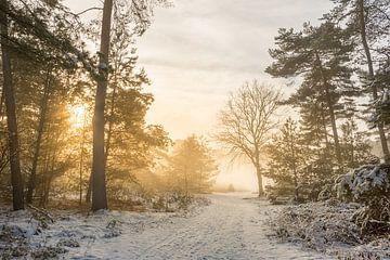 Winter in de Brunssummerheide van John van de Gazelle