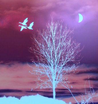Mondlicht van Vera Laake