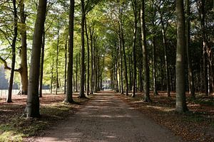 Bosweg in de herfst van