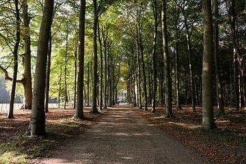 Bosweg in de herfst van Frank de Ridder