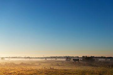 koeien in de polder van Petra Slingenberg