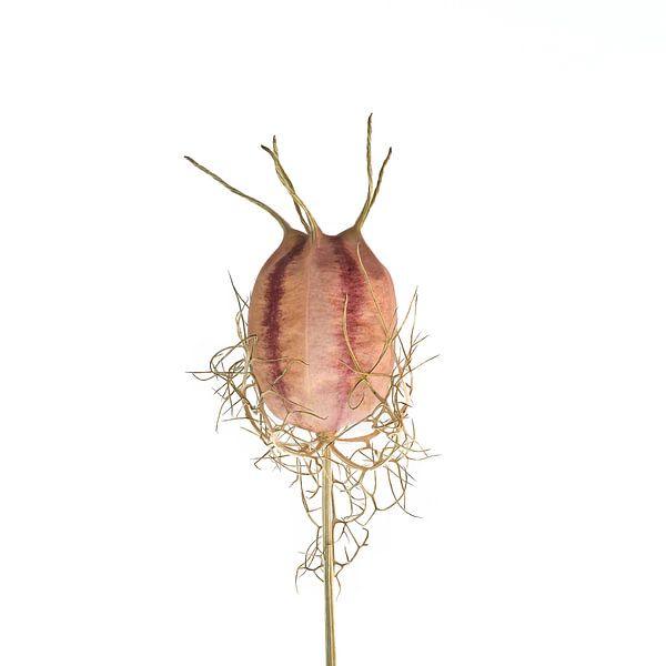 Flower power van Hans Kool