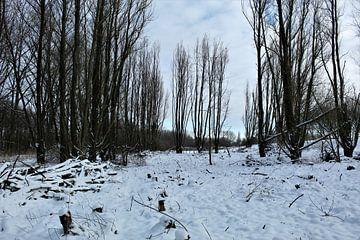 Het bos in de sneeuw van Britney Suoss