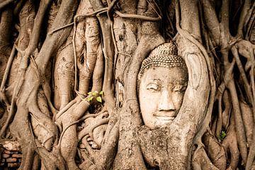 Hoofd van Boeddha vergroeid in boom van Lisanne de Beun