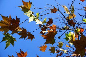 Takken met herfstkleuren van Folkert Jan Wijnstra