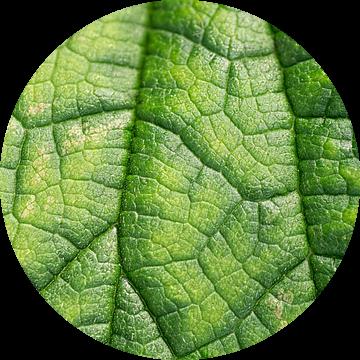 Groen als een blaadje van Birgitte Bergman