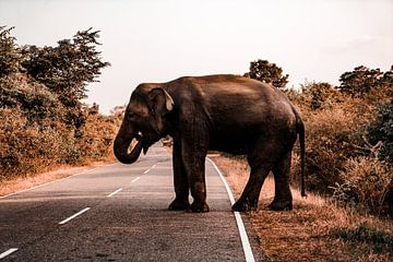 Éléphant sur Fotoverliebt - Julia Schiffers
