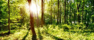Lichtung im Wald von Günter Albers