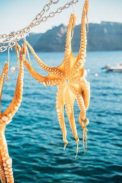 Octopus in de Zon van Patrycja Polechonska