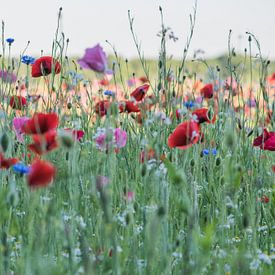 fleurs sauvages ensoleillées sur Jeannette Braamskamp