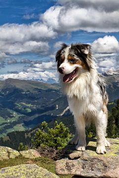 Südtirol Hund auf dem Raschötz von Martina Weidner