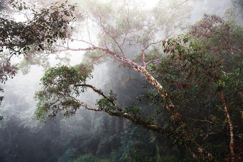 Mist in de jungle van Yvette Baur