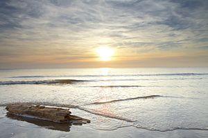 Wrakhout jutten tijdens zonsondergang op het strand van Julianadorp (1)