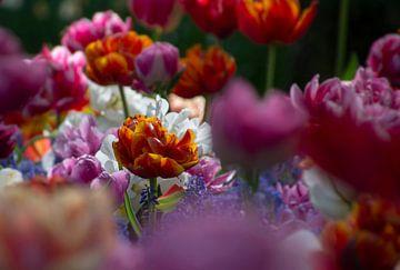 Kleurige tulpen van Melanie kempen