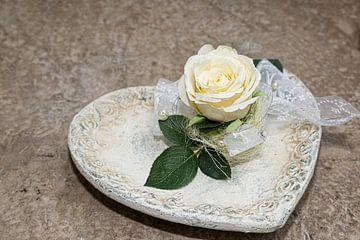 witte roos van Thomas Heitz
