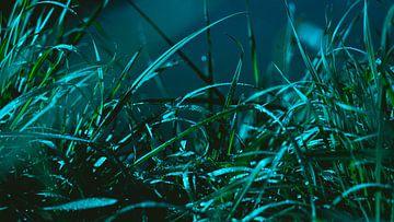 Nat gras aan de Moesel in Duitsland van Marjon Boerman