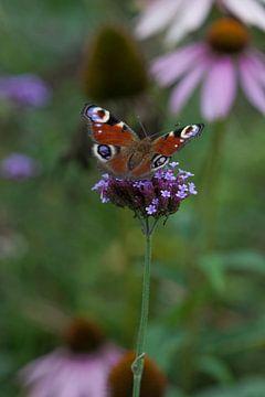Vlinder op bloem sur Tot Kijk fotografie: natuur aan de muur